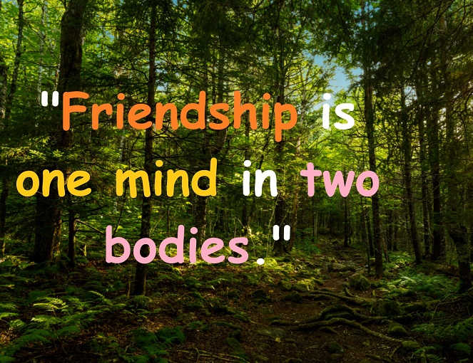beautiful quotes on friendship share your friends